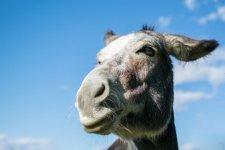 Donkey-720x480.jpg