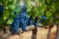 corfu-winery-720x480.jpg