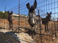 greek-donkey1-720x540 (1).jpeg
